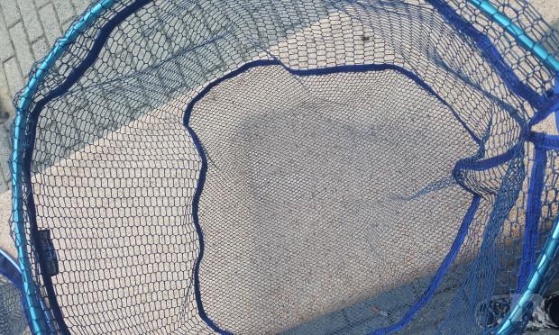 Testa di Guadino Ovale Resinata 60x50  foto-39065