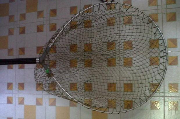 guadino diametro 60 cm nuovo foto-7368