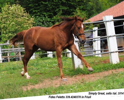 cavallo, puledro di massima caratura genetica da destinarsi al salto/dressage/completo foto-8663