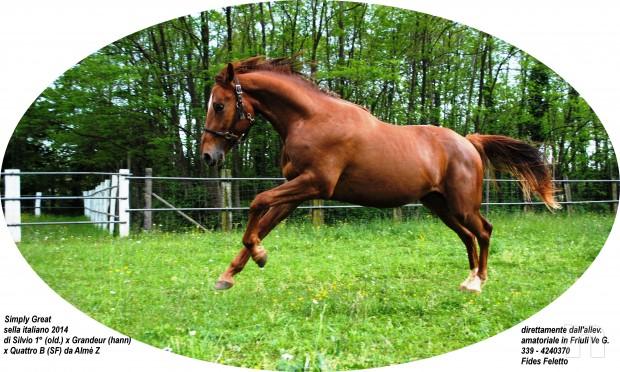 cavallo, puledro di massima caratura genetica da destinarsi al salto/dressage/completo foto-8661