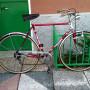 Bici Torpado