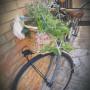 Vendo bici fashion da donna uno stile particolare grigio panna